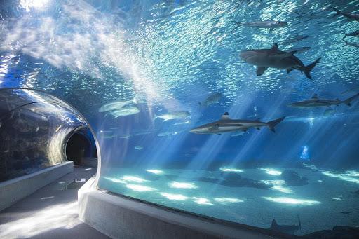 Maui Ocean Center độc đáo.